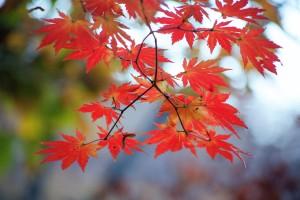 autumn-leaves-3554296_1920